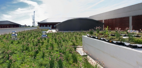 Newmark Green Roof, credit: Lisa Lauderdale