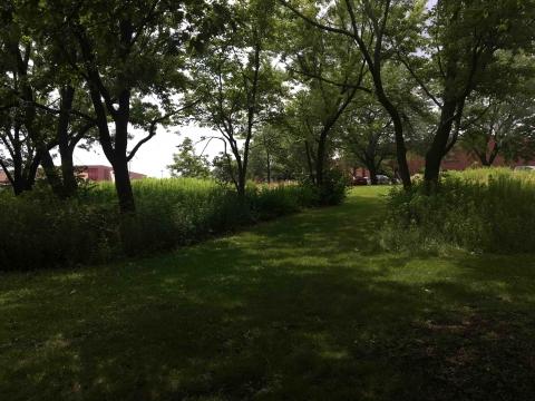 pedestrian path between low mow zones near trees