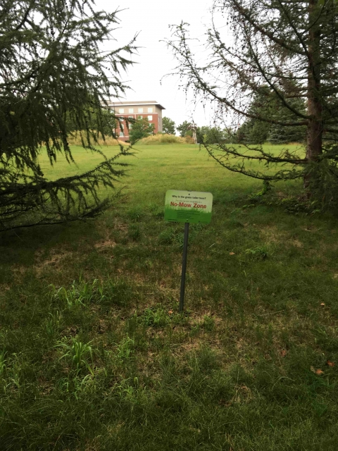 older low mow zone sign in a recently mowed zone
