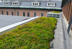Lincoln Hall Courtyard Green Roof, showing moss-like greenery
