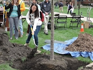 student adding soil to Arbor Day 2015 tree